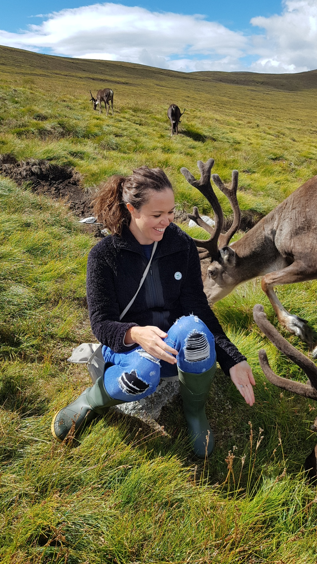 Brie feeding Reindeer In The Cairngorms Scottish Highlands
