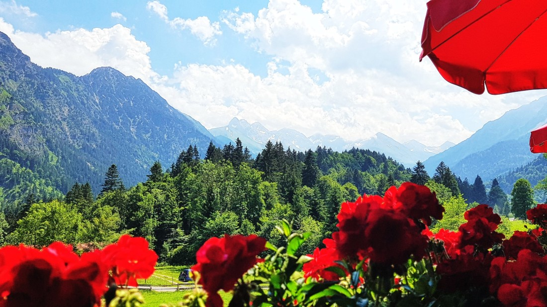 View Alpine Roses